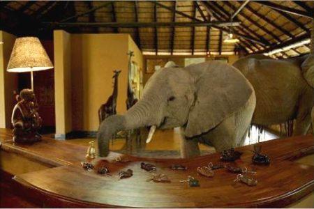 Zambia, elefantes en el hotel