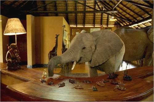Hotel Mfuwe Lodge