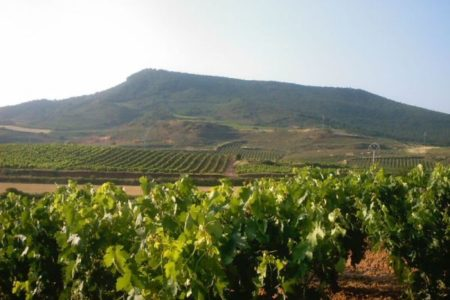 Montilla, referente andaluz del vino
