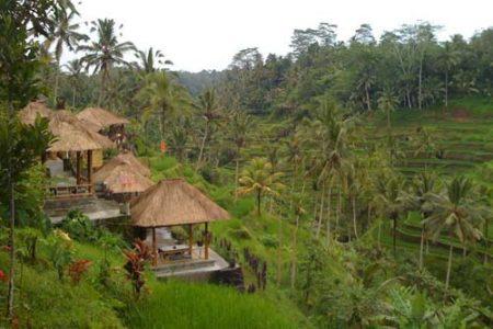 Caminando por los arrozales de Ubud, Indonesia