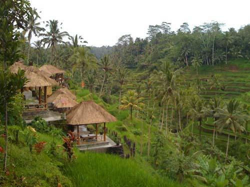 arrozales-de-ubud-1