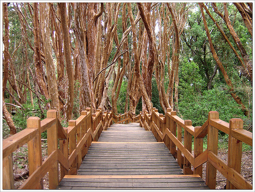 bosque-arrayanes-en-argentina