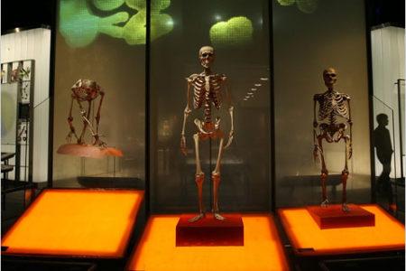 El Museo de Neanderthal, evolución humana en Düsseldorf