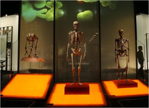 museo-neanderthal1