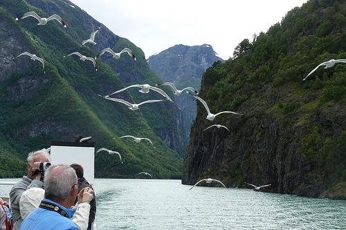 fiordo-noruego