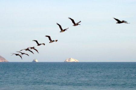 I Congreso Virtual de Turismo Ornitológico