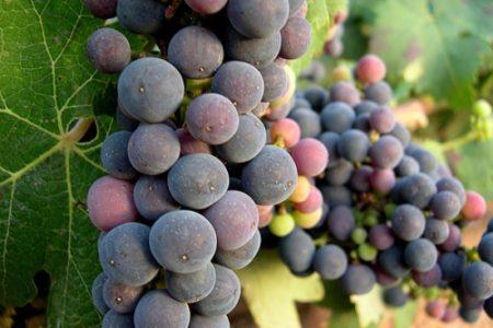 Nuevo portal web sobre gastronomía riojana