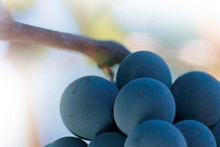XIII Concurso Regional de Vinos de Canarias