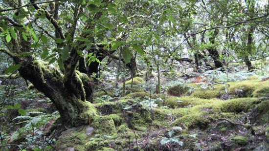parque-nacional-garajonay