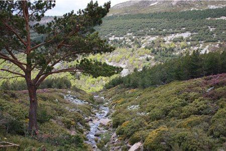 Escapada senderista al Parque Natural Sierra de Cebollera