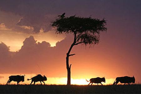 10 días en Kenia, desde 1.079€