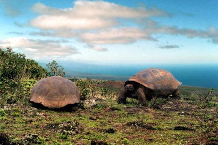 Islas Galápagos, misteriosas y fascinantes