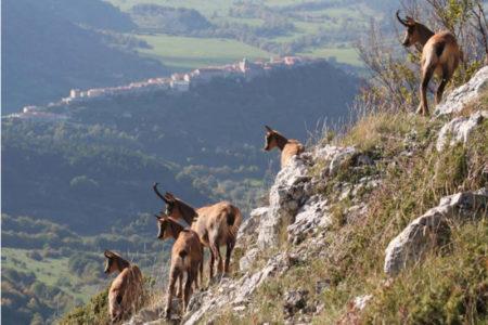 Parque Nacional Los Abruzzos, ecoturismo cerca de Roma