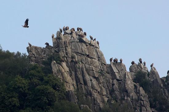 Parque Natural de los Hornachuelos