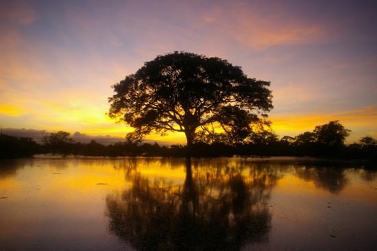 amazonia-boliviana