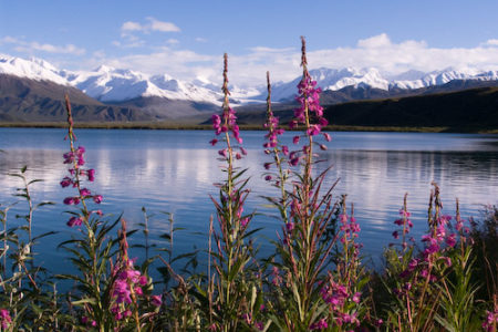 Alaska, tierra virgen