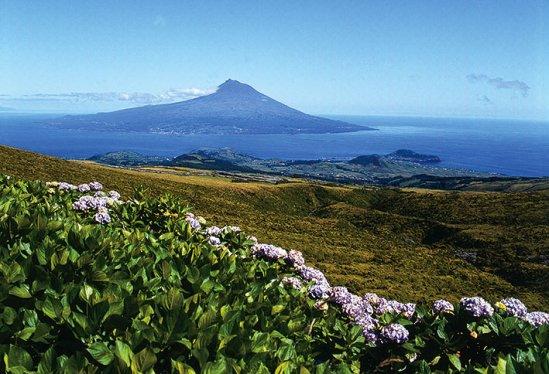 Parque Natural Faial de Azores