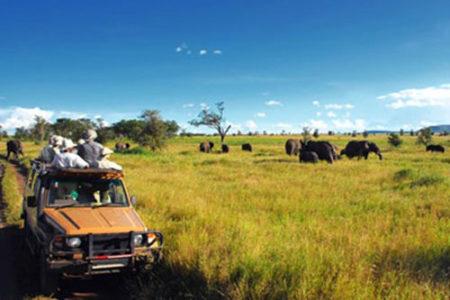 Los safaris más populares de África