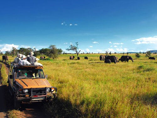safaris-en-africa