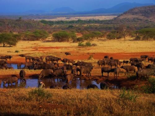 Parque Serengueti