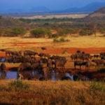 El Parque Nacional Serengueti