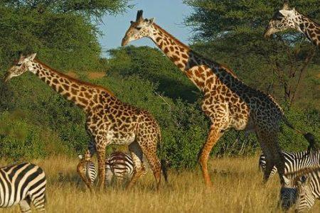 Recomendaciones para hacer un safari con niños